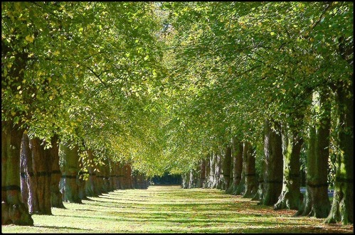Lime_avenue_clumber_park_flickr