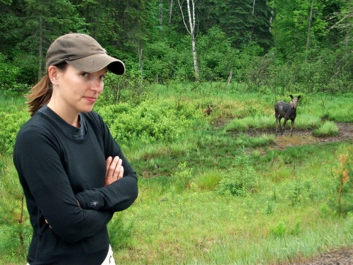 Algonquin_park_moose